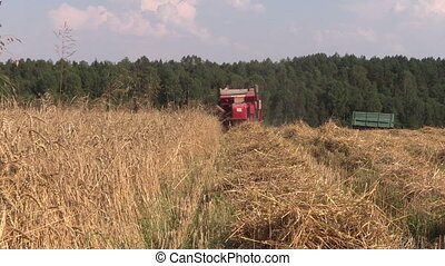 combine harvest wheat - Back of agricultural combine...