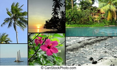 tropical impressions of asia