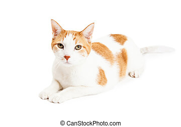 Attentive Orange Tabby Cat Laying