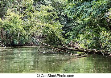 Green floodplain forest in southern Moravia, Czech republic,...