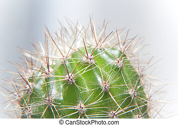 zoomed green cactus - extra zoomed green cactus with many.