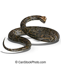 royal python - 3D rendering of a royal python with clipping...