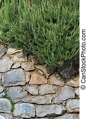 stone wall with climbing plants