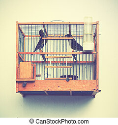 Canaries in the cage on the house wall. Retro style filtred...