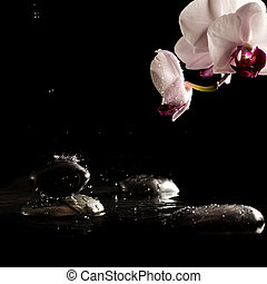 Wet Spa Stones with Beautiful Fresh Flower - Black Spa or...