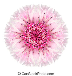 Pink Cornflower Mandala Flower Kaleidoscope Isolated on...