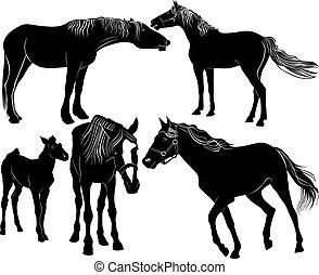 caballos,