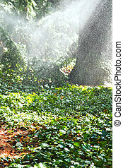 heavy rain in garden in sunny autumn day, Crimea