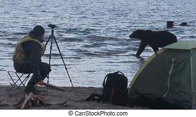 Bear near the tent Photographer