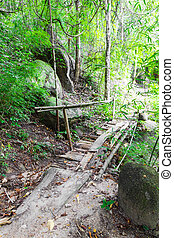 Old wood bridge in forest