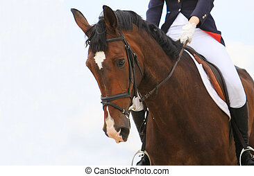 jokey on dressage horse