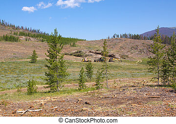 Logging Trees Killed by Pine Beetles - clearcut logging of a...