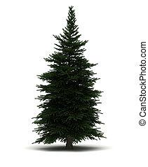 Single Pine Tree