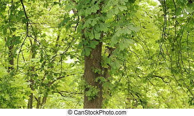Wind blowing leaves of a tree above