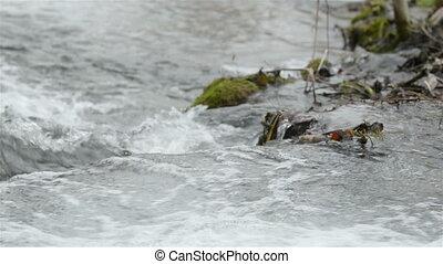 Fast mountain creek flowing