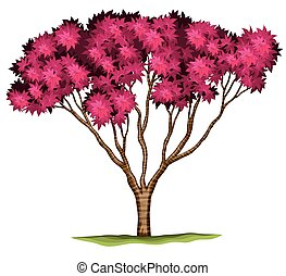 A bloodgood Japanese maple plant - Illustration of a...