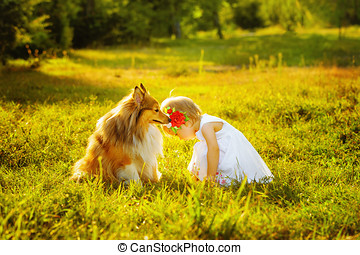 Little girl and dog breed sheltie playing outdoors on a...