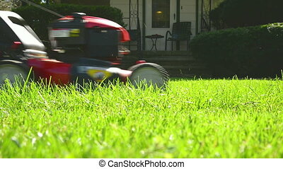 Mowing Summer Lawn - Multi pass with red lawn mower on yard