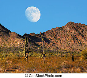 Desert Moon - Desert moon over the southwestern USA desert...
