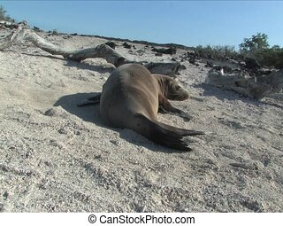 Sea lion relaxing on beach of the Galapagos Islands