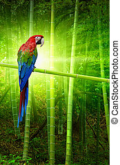 Big parrot - Exotic bird, big colourful parrot on bamboo...
