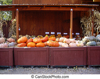Halloween Produce Stand - Pumpkins and gourds at produce...