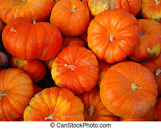Orange Pumpkins - Orange pumpkins in California