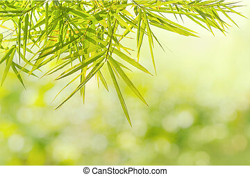 Green Bamboo leaf background