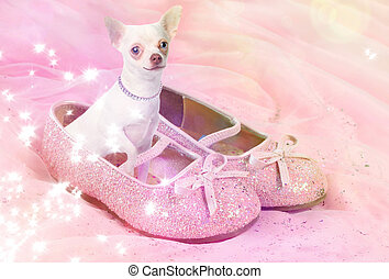 Chihuahua dog in pink glittery shoe - Little female...