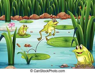 Frogs - Illustration of many frogs in the pond