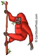 Orangutan - Illustration of a close up orangutan
