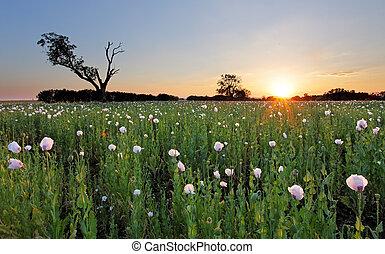 sommer, blumen, landschaftsbild