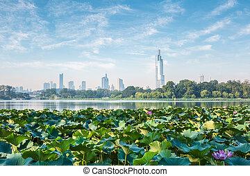 nanjing skyline and lotus , modern city with lake