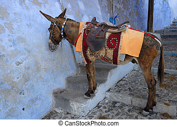 Saddled mule or donkey waiting for tourists to carry up or...