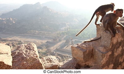 monkey sitting on a stone wall at the edge of the cliff at...