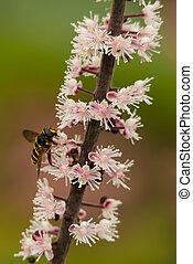 Hoverfly on flower stem - Hoverfly, of the family Syrphidae,...