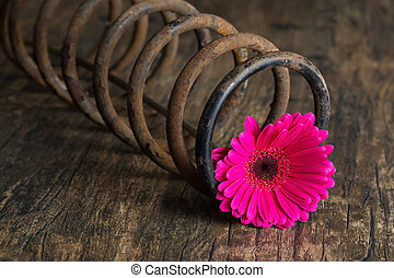 Single flower in metal spring on grunge wood surface artistic co