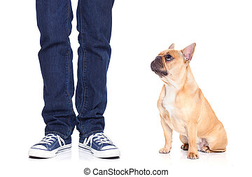 dog and owner - fawn bulldog dog and owner ready to go for a...