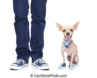 dog and owner - dog owner with dog both wearing sneakers,...