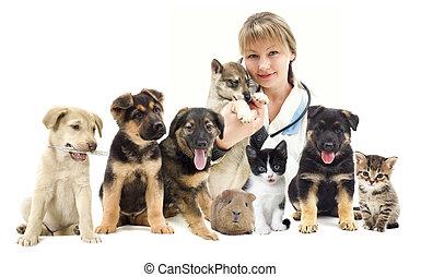Veterinario, y, gato, y, perro,