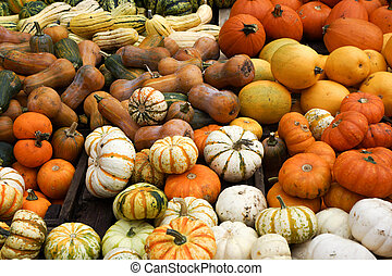 Squashes - pile of ripe squashes
