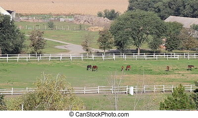farmland landscape horses in corral