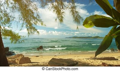 Plants on the shore of a tropical sea Beautiful exotic...