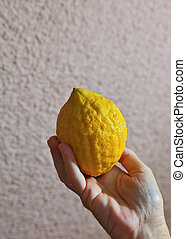 The etrog in hand - Ritual yellow citrus - etrog in a female...