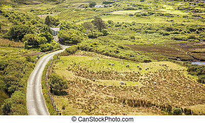 sheeps Ireland - An image of a green meadow with some sheeps...