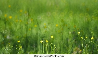 Meadow grass with yellow flowers