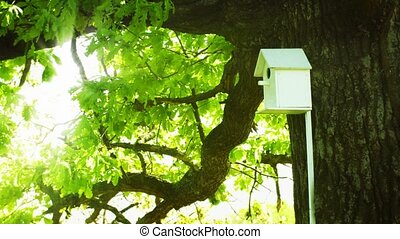 Homemade birdhouse on the trunk of a large oak tree