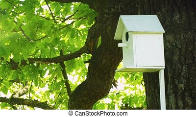 Wooden house for birds fixed on the tree trunk