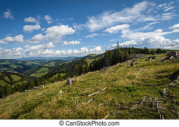 Forest - Clearcut forest and uncut forest in...