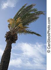 palma, árvore,